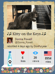 3.27.14 botl of the day kitty on the keys