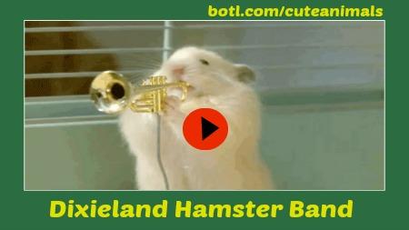 Dixieland Hamster Band