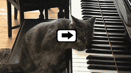 Kitty on the Keys