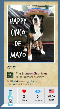brunson cinco de mayo