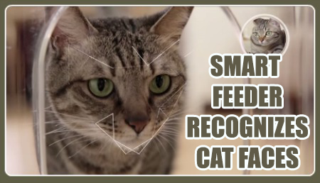 cat feeder
