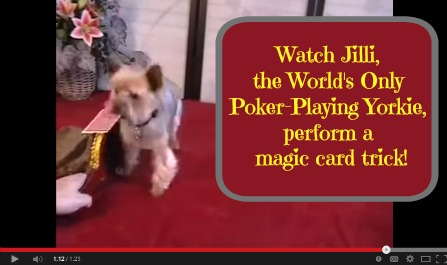 poker playing card trick jilli dog
